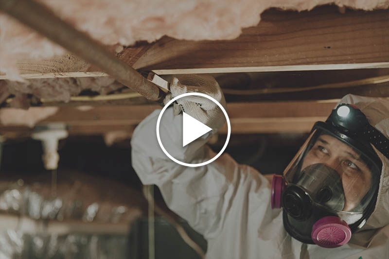 Mold Removal in Raleigh, North Carolina